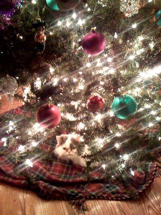 Beau under tree
