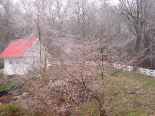 Ice storm 2009 001